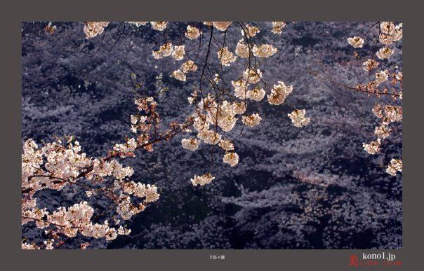 千鳥が淵桜06