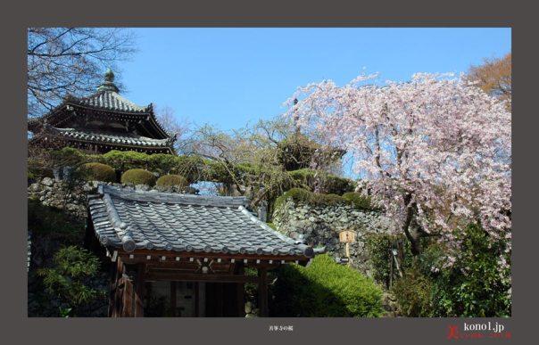 善峯寺の桜01