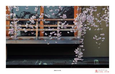 祇園白川の桜03
