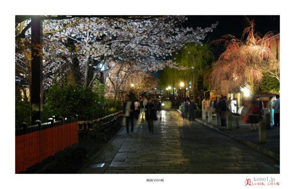 祇園白川の桜06
