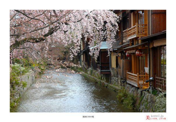 祇園白川桜10