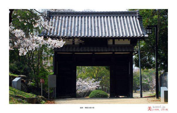 福岡舞鶴公園の桜04