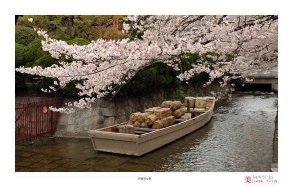 高瀬川桜05