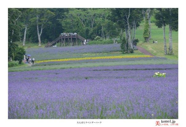 沼田市 東急リゾート たんばらラベンダーパーク