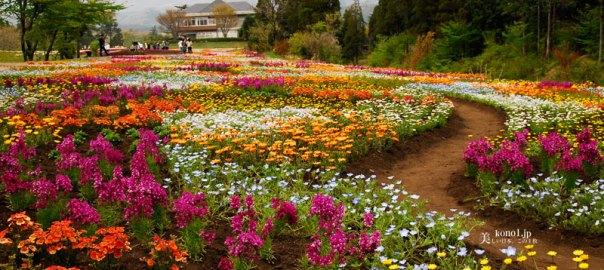 ブログ 九州 くじゅう花公園 阿蘇くじゅう国立公園