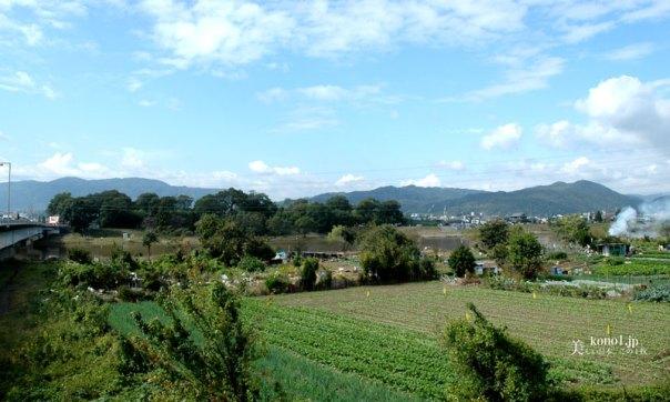 ブログ 桂離宮 桂川対岸から見た桂離宮
