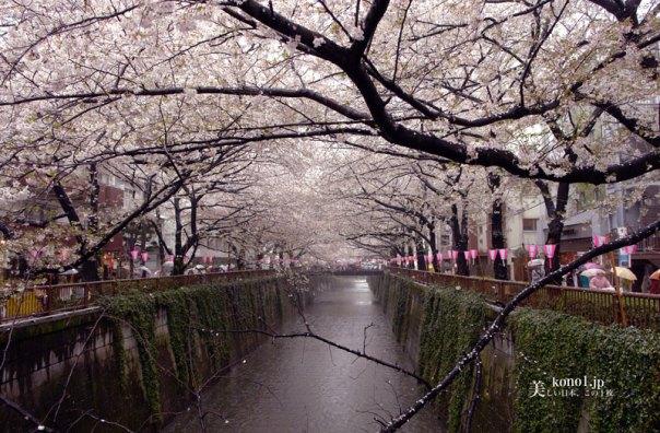 東京 夜景 クリスマス イルミネーション 中目黒 目黒川 桜 LED  青の洞窟