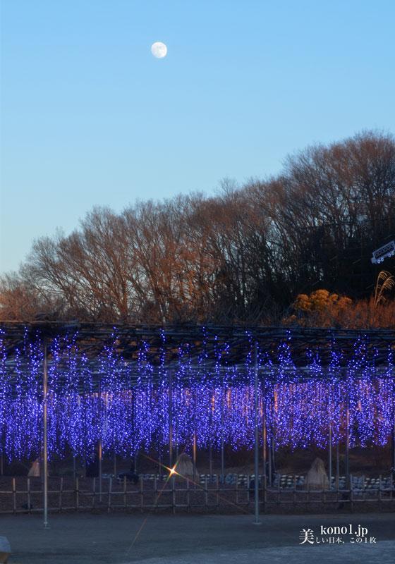 栃木県 あしかがフラワーパーク 大藤 関東三大イルミネーション 夜景鑑定士 日本一