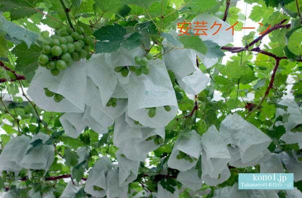 ぶどう ピオーネ 安芸クイーン ブラックビート ロザリオビアンコ 庭で栽培
