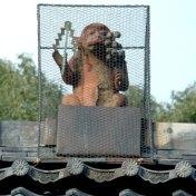 京都 皇城表鬼門 比叡山延暦寺 赤山禅院 方除け 御幣と鈴を持った猿  紅葉名所