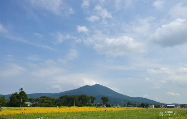 茨城 筑西市 あけのひまわりフェスティバル 明野 筑波山