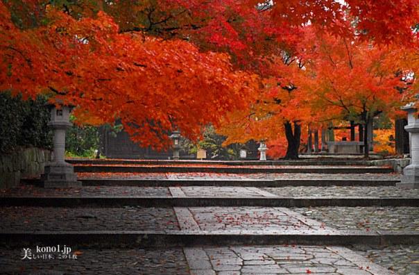 京都 真如堂 美しい紅葉