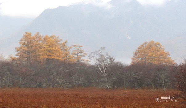 栃木県 日光 戦場ヶ原 紅葉 草紅葉