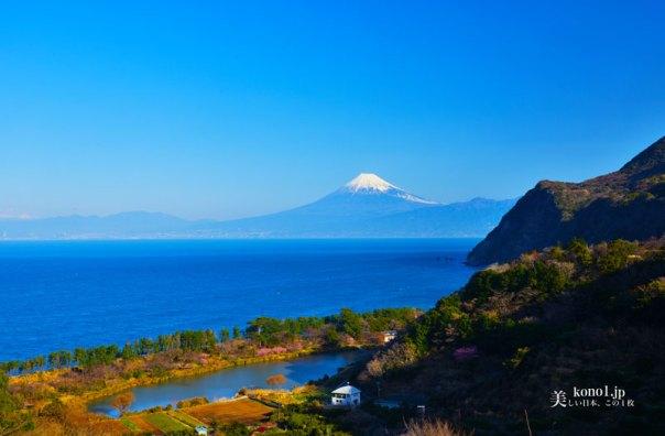静岡県 西伊豆 井田 明神池 富士山 煌めきの丘 菜の花 桜
