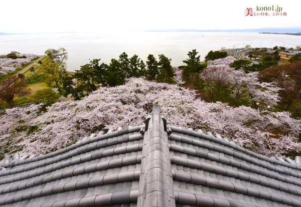 長浜城 雪 桜 梅林 豊公園 さくら 名所100選 滋賀県