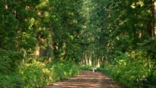 栃木県 日光街道杉並木の壁紙