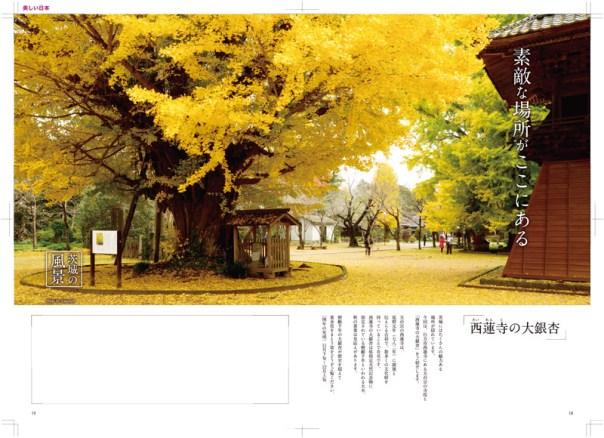 Takataro撮影 メディア掲載 西蓮寺の大銀杏