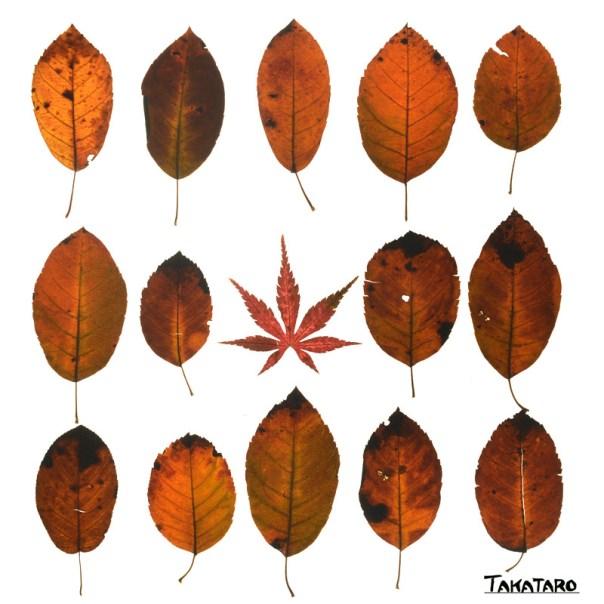 世界に一つだけの落ち葉の集団