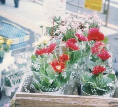 フィルムカメラbabysemで撮った花の写真