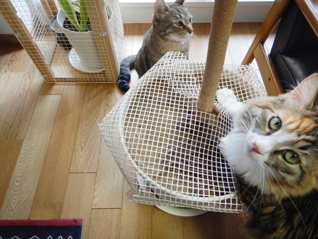 猫と植木鉢カバー