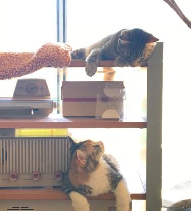 仲良しの猫2匹