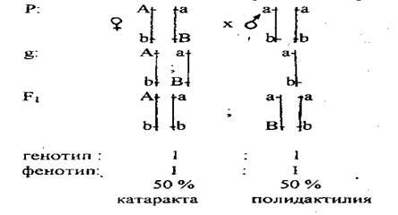 normál látású férfiak génjei)