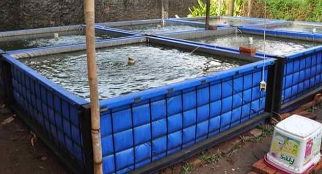metode ternak lele dengan kolam terpal