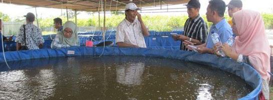 workshop kolam terpal bulat
