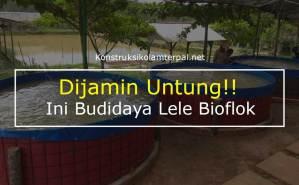 Dijamin Untung!! Ini Budidaya Lele Bioflok