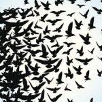 Modernidad y espiritualidad: Reflexiones sobre la Libertad. Por Ricardo V. López