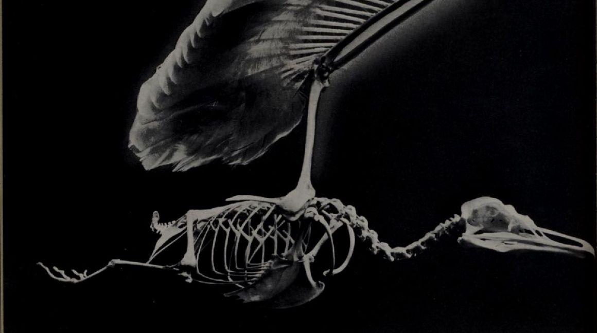 skeletonb670