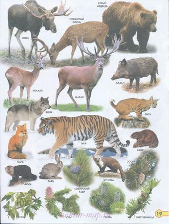 Растения и животные лесной полосы России. Карта растений и ...