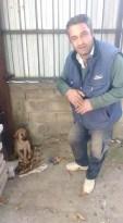 Akşehir Belediyesinin tedavi ettiği köpek iyileşti