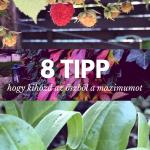 8 hasznos tipp, hogy kihozd az őszből a maximumot!