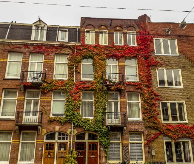Beautiful flowery houses of Amsterdam