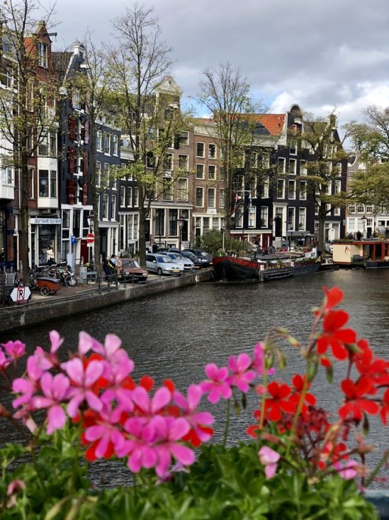 The view on Amsterdam houses and canals