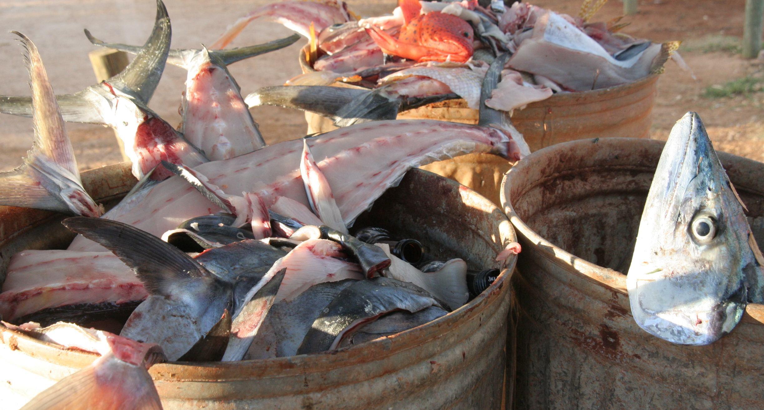 post-tuna catch