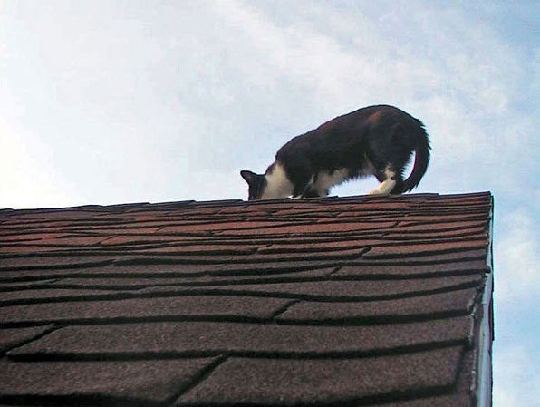on-the-roof
