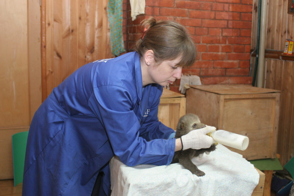 Katya Pazhetnov feeds a young bear cub from a bottle, at the Orphan Bear Rescue Centre.