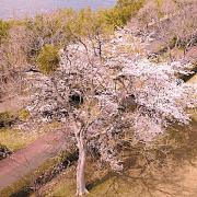 彩湖ドローンからの写真