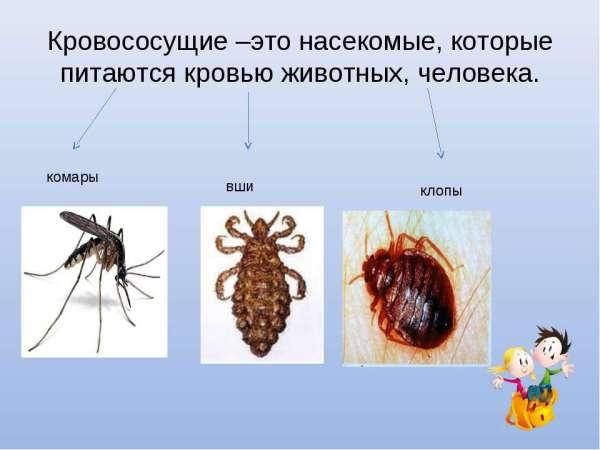 Кровососущие насекомые – фото и описание - Борьба с ...