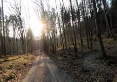 Anstieg Richtung Straßberg durch hellen Mischwald