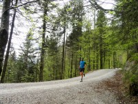 Helle Laubmischwälder am Fuß des Herzogstands