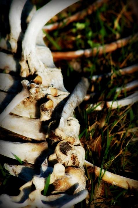 Unkown Spine