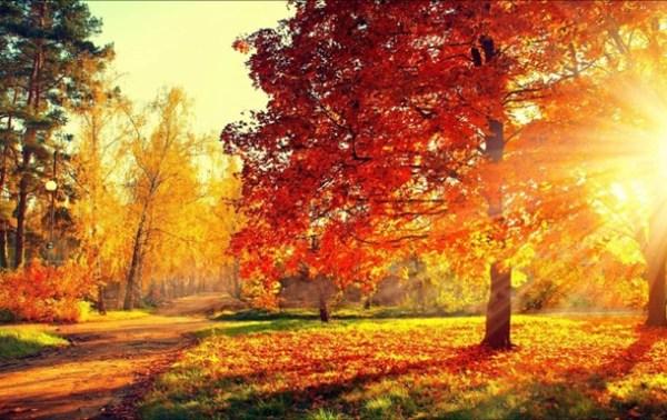 Как подготовится к осени 2018 ᐉ полезные советы и ...