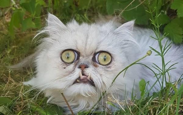 """Фото """"самого страшного"""" кота стали вирусными ..."""