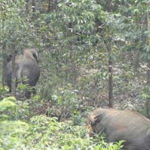 Niat Mau Ambil Foto, Warga Indragiri Hilir Malah Diserang Gajah