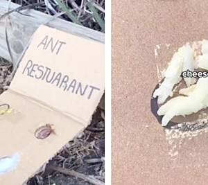 Aneh tapi Nyata, Orang Ini Buat Restoran untuk Semut