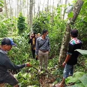 Diduga Limbah Rumah Sakit, Pohon Karet Warga Balida Balangan Rusak