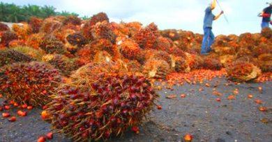 Gaji Hingga Rp13 Juta, Warga NTB Berpeluang Kerja Sawit di Kalimantan